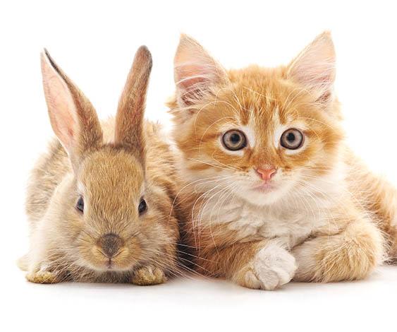 「うさぎと猫は一緒に飼える」って本当? うさぎと保護猫3匹が暮らす我が家の場合/ふうたの飼い主