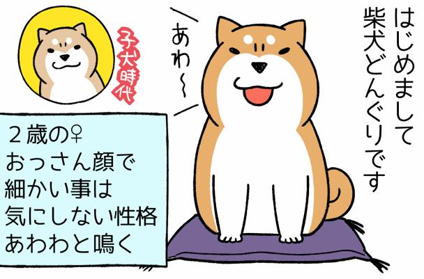 柴犬歴20年。靴下を盗られても...!愉快で癒される犬との暮らし/宮路ひま
