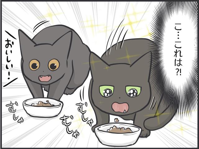 猫のブーム2.PNG