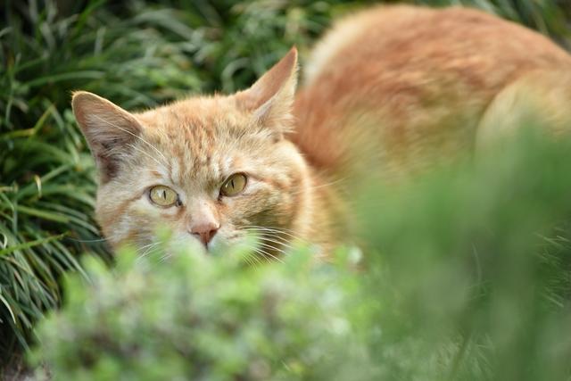 中古の一軒家を購入、希望に満ち溢れた私の前に現れた「花壇で用を足す近所の猫」。3か月に及ぶ攻防戦の結果は...⁉
