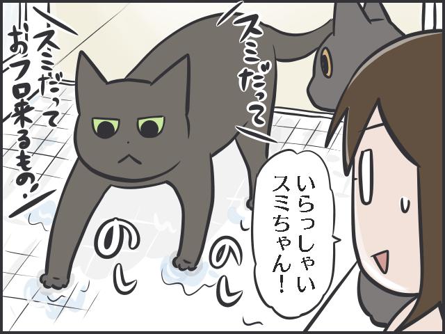 不器用猫4.PNG