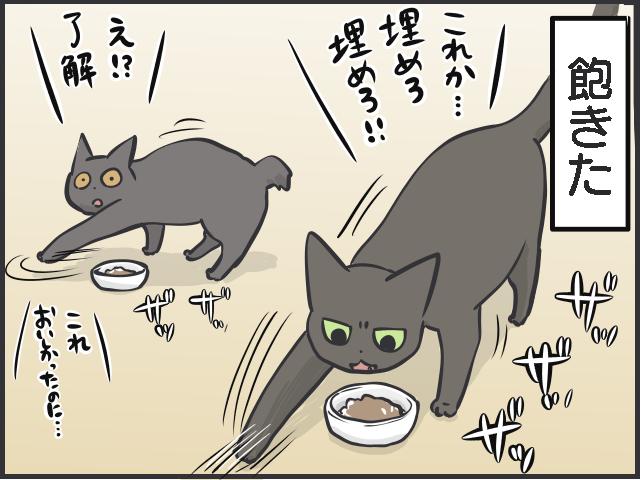 猫のブーム4.PNG