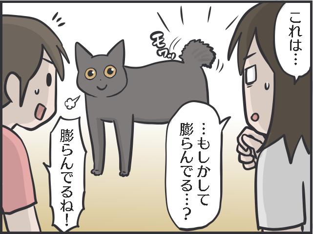 猫のしっぽについて語りたい! 興奮してモサッと膨らむ姿も愛おしい!/フニャコ