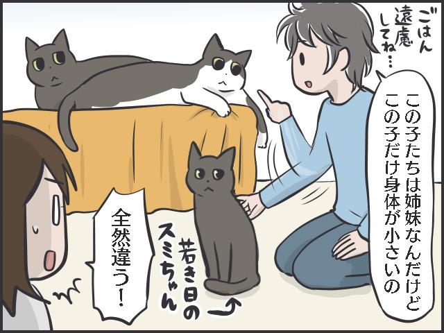 不器用猫2.PNG