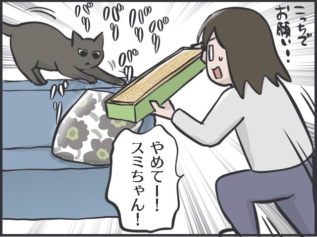 コロナ禍で猫を飼う人が増えている!? 「かわいい」だけじゃない猫と暮らす現実とは/フニャコ