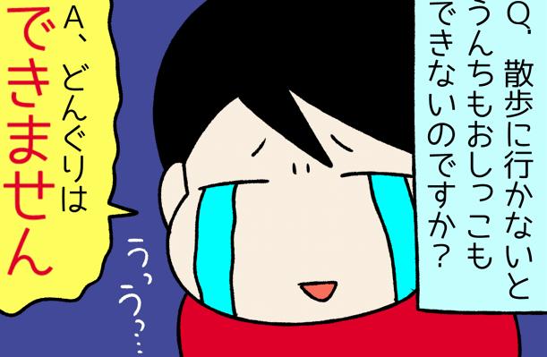 キレイ好きでガンコ!?柴犬さんのおトイレ事情/宮路ひま