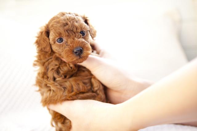 動物が苦手なのに...。仕事場で「社長の息子の犬」の面倒を見ることになって訪れた「苦行と変化」