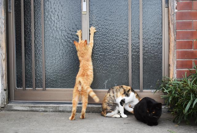「自然に反してる」と飼い猫の去勢手術をしない母。でも「ご近所トラブル」の予感がぷんぷんして...