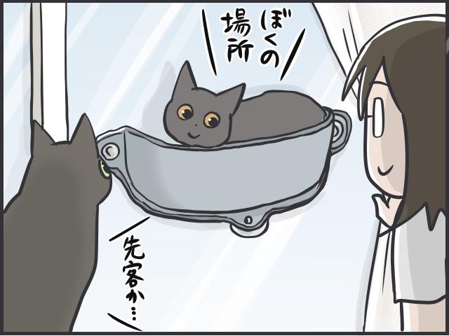 猫のブーム5.PNG