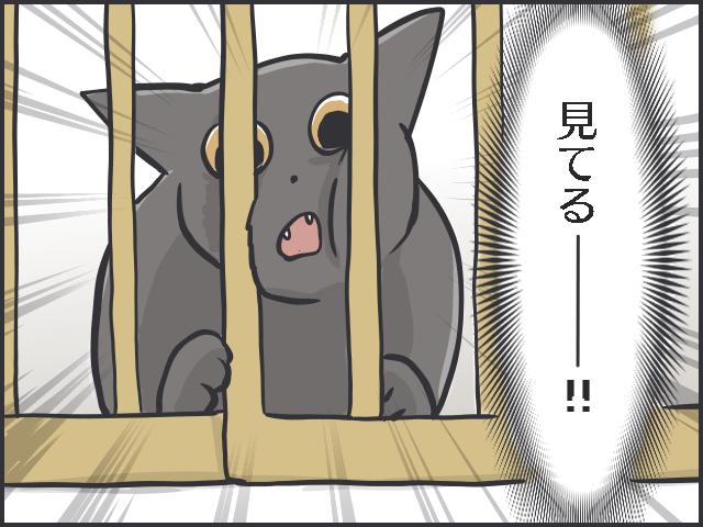 シニア猫の分までフードを食べちゃう若猫。食事の部屋を分けてみたら...⁉/フニャコ