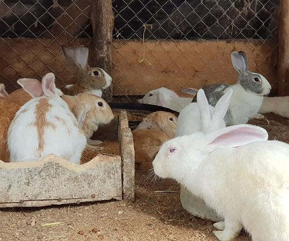 「学校ウサギ」のニュースを見て「うさぎと暮らしている私」が考えたこと/ふうたの飼い主