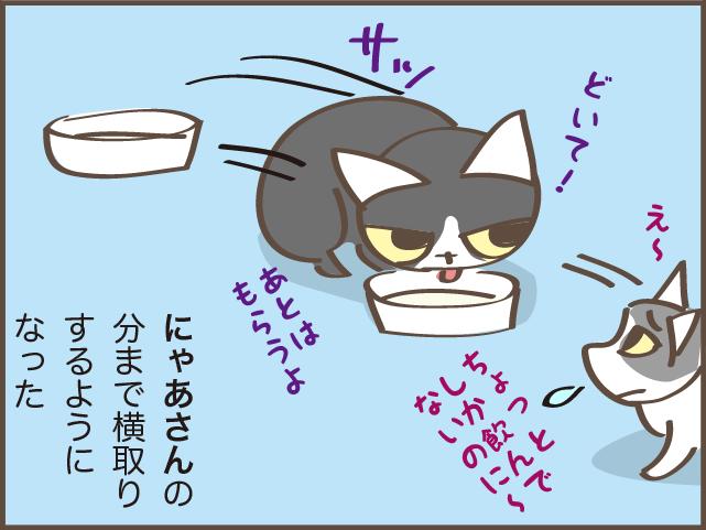 立場が逆転! 猫の上下関係は体の大きさでコロコロ変わる?/しまえもん