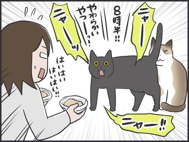 ご飯の時間だニャー!時計ぴったりな猫たちのスケジュール/フニャコ