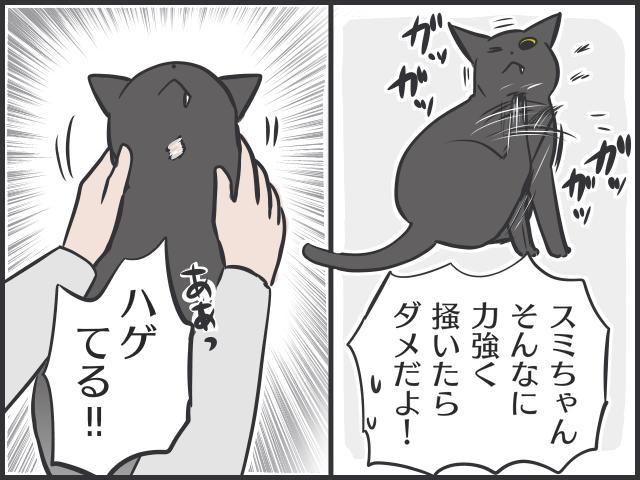 生後2カ月の「暴れん坊」猫が家にやってきて...8歳の「のんびり」先住猫にハゲが!?/フニャコ