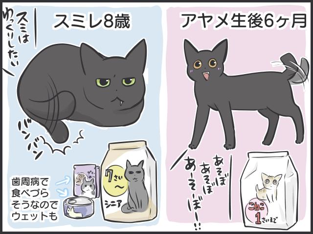 隣のキャットフードはおいしく見える!? シニア猫と子猫の「食事問題」/フニャコ