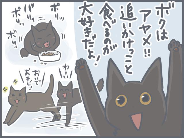 「おっとりシニア猫」と「ヤンチャ子猫」の共同生活。猫それぞれの目線で考えてみた♪/フニャコ