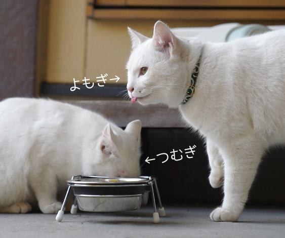 ご飯をあげて半年。懐き始めていたはずの猫が...⁉「よもぎ突然の失踪」/ふうたの衝撃 ~にゃんず来襲~(3)