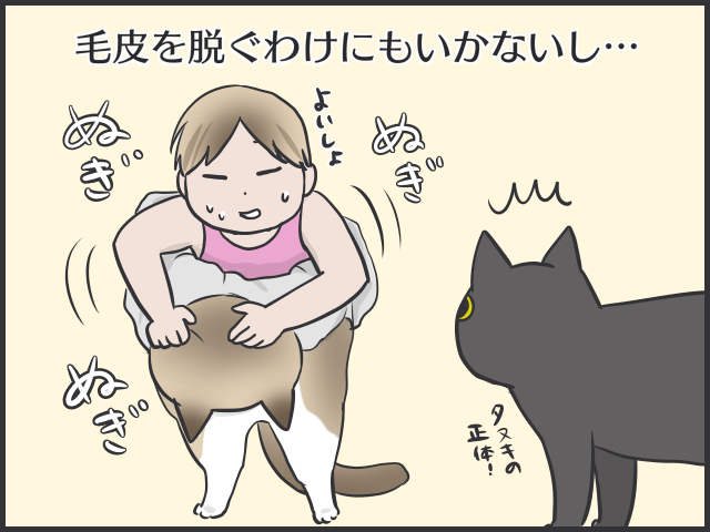 暑すぎるぜ夏!毛皮を脱げない猫たちはどう過ごしてる?/フニャコ