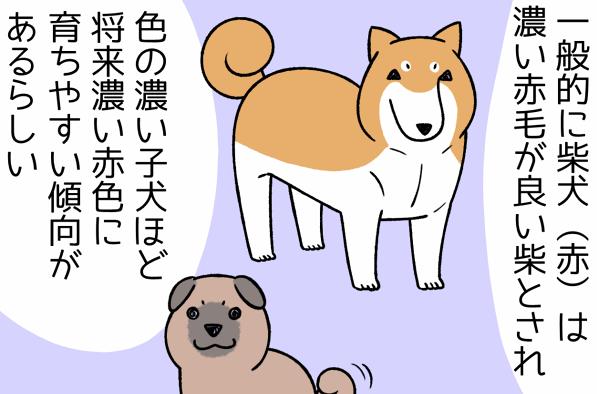 「良い犬」の見分け方!?愛犬との出会い、我が家の場合/宮路ひま