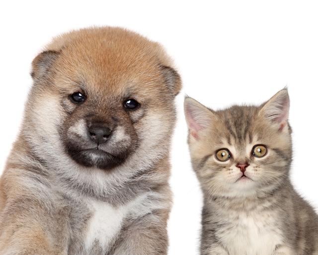 今年は戌年!だけど猫エピソードも♪ ペットにまつわるオススメ記事4選+1