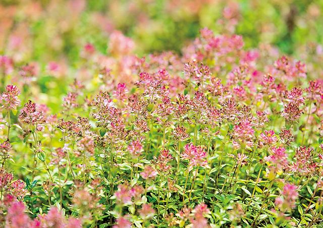 イギリス人ガーデナーが語る「生き方を教えてくれる6つの植物」