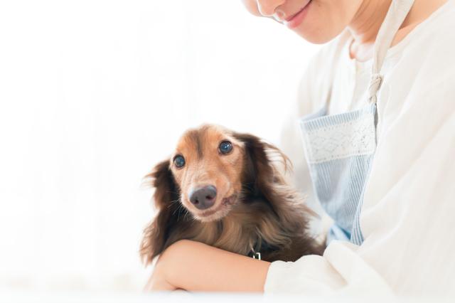 ペットだって高齢化! 老後はペットや趣味に適した「特化型保険」に入ろう!