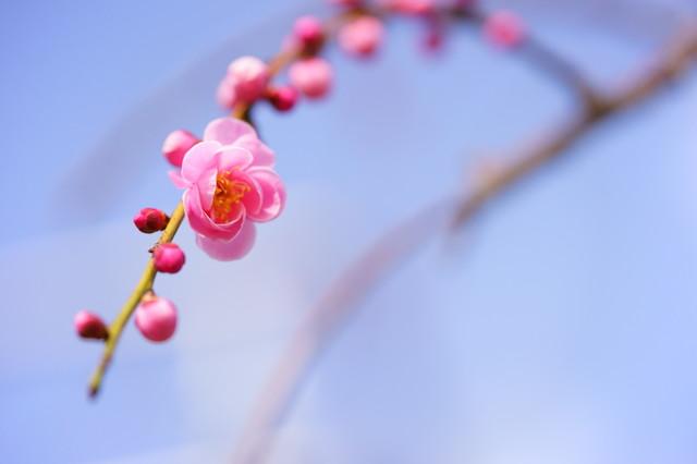 「楽観主義で生きる」ということ/岸見一郎「生活の哲学」