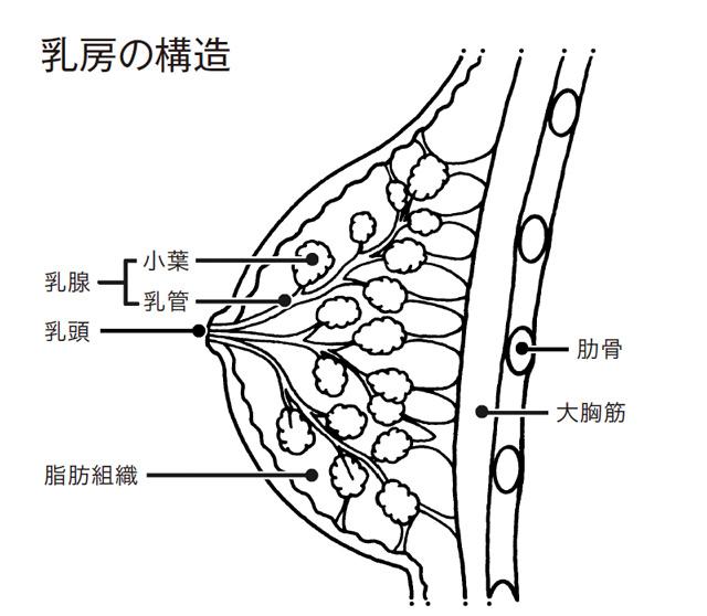 女性にもっとも多いがんは「乳がん」。治療にかかる医療費の平均総額は77万2000円って知ってた?