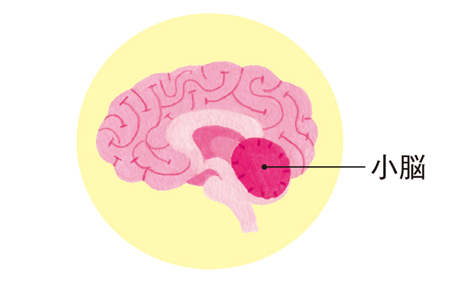 「めまいの軽減」にも重要! 体のバランスを保つ「小脳」の役割とは