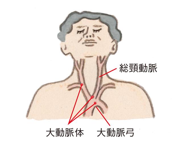 70、80代は「首の頸動脈」に注意...