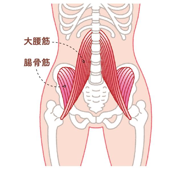 弱ると猫背に? 腰痛対策にも重要な「腸腰筋」とは | 毎日が発見ネット
