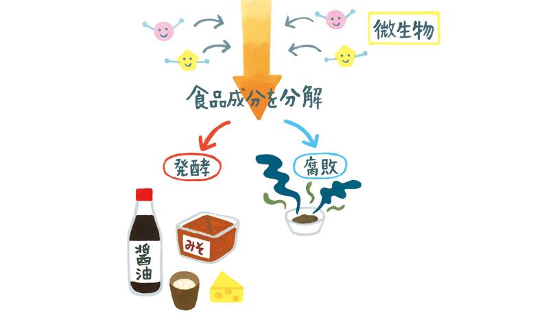 腸を健康にする「腸寿」が長生きにつながる!医師が教える「発酵食」の魅力