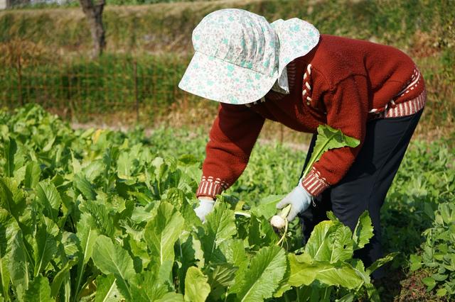 菜園での作業。帽子も被り、水分も採っていたのに吐き気が...熱中症?/高谷典秀先生「なんでも健康相談」