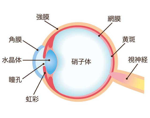 近視・遠視と、老眼は別物。仕組みからして違います/老眼
