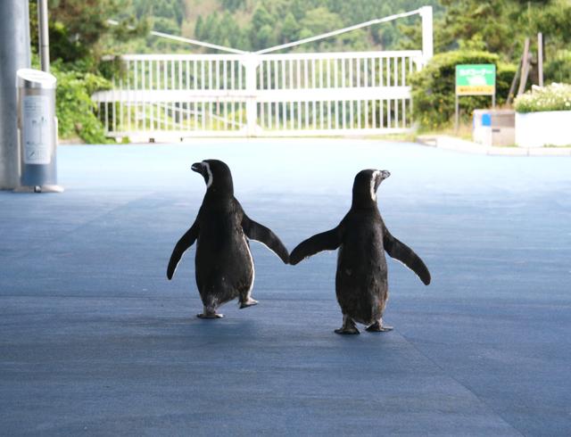 ペンギンみたいな