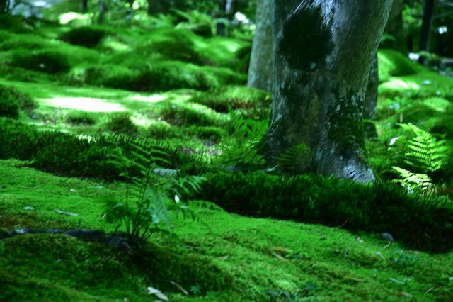 京都の西芳寺は「脱俗」を体現している/枡野俊明(4)