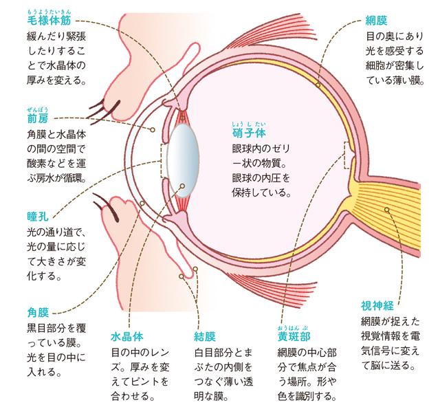 50代から増える目の病気に備えて!知っておきたい「目の構造と働き」