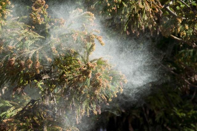外出時、家の中。こうやって花粉をブロックする!/花粉症最新治療(8)