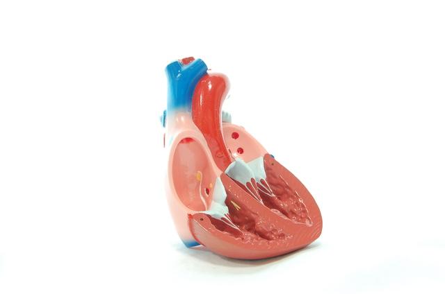 虫歯が原因となることも? 心臓のバルブが故障する「心臓弁膜症」/やさしい家庭の医学