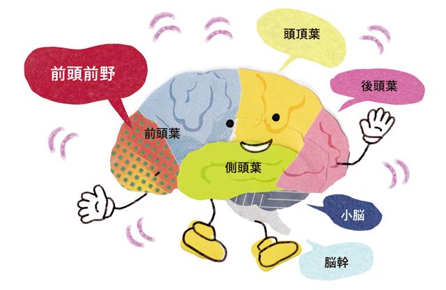 前頭前野を鍛えて脳の老化予防!専門家が教える「頭の体操」の重要性