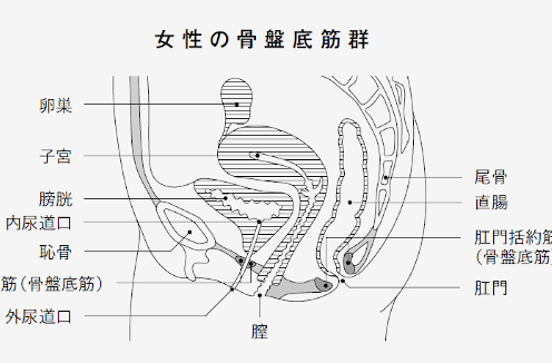 計画的な「おしっこ我慢」で尿漏れ対策! 排尿トラブルを解決するセルフケア法