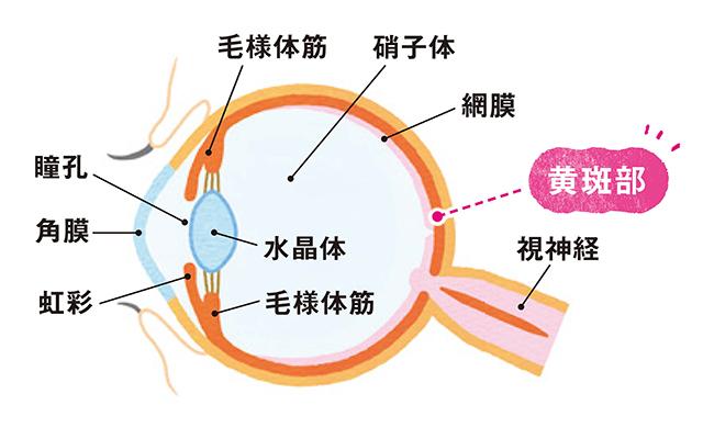 50歳から特に気をつけたい目の不調「加齢黄斑変性症」とは