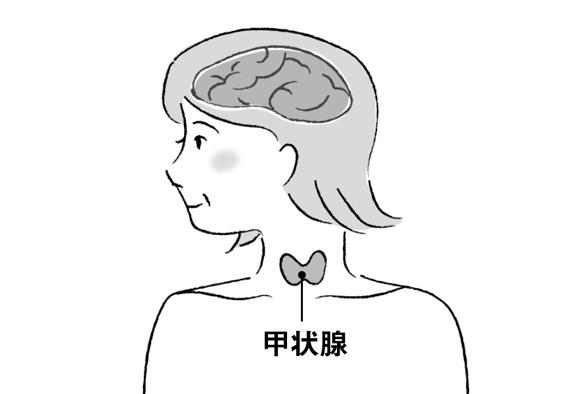 発病者の9割が女性...!? イライラ、顔のむくみ...他の病気と間違えやすい「甲状腺の病気」