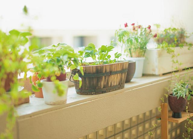 ご近所植物マップを作って自然と触れ合う→認知症を予防!/認知症予防(12)