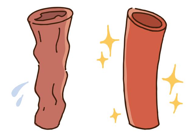 毛細血管を修復して血管を健康に保つ。血管の内側を支える分子を知ろう/若返り健康法