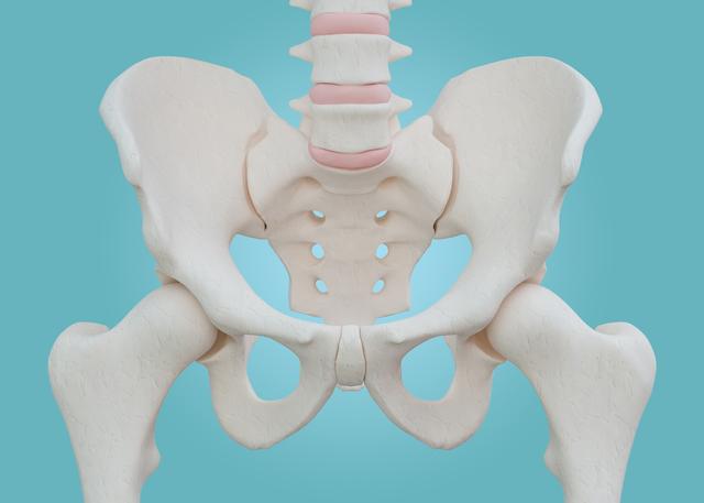 骨盤底筋って体のどの辺りにあるの? どんな役割?/尿漏れ解消(2)
