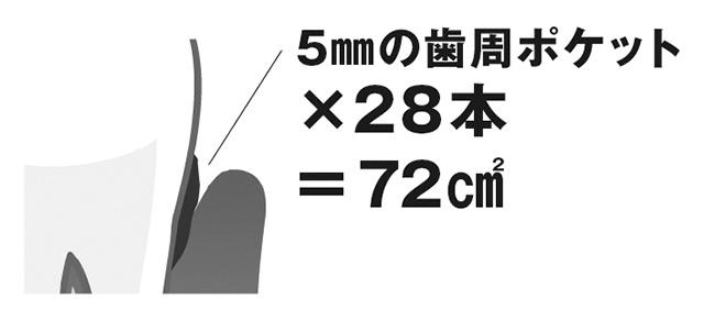 dokudashi_P81_1.jpg