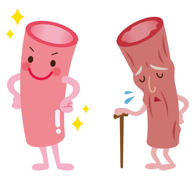 50~60代は血管の内壁を健康に!/「乱れ血圧」にご用心(4)