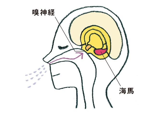 嗅神経を刺激して認知症を防ぐ「アロマセラピー」のススメ