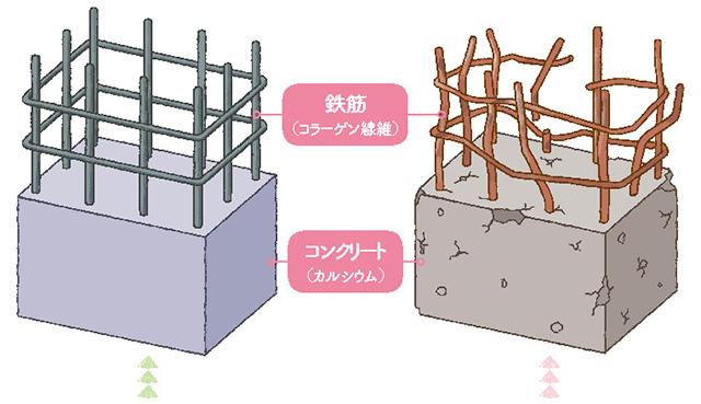 イメージはコンクリートと鉄筋。「骨の仕組み」をご存知ですか?
